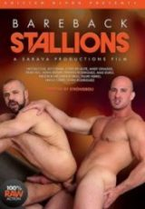 Bareback Stallions